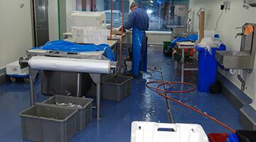 food sector - visverwerking